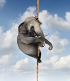 18547381-strong-determination-managing-risk-and-uncertainty-with-a-large-elephant-climbing-a-rope-high-in-the